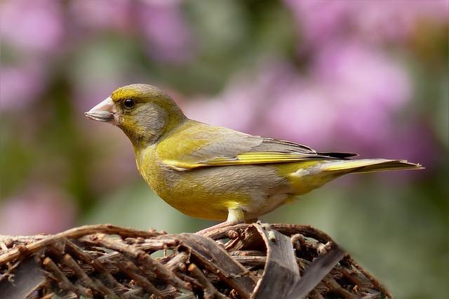 malý ptáček